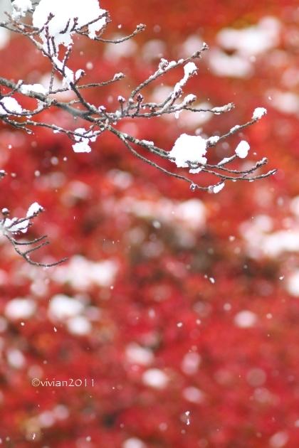 初雪を撮りに ~八幡山公園~_e0227942_22343361.jpg