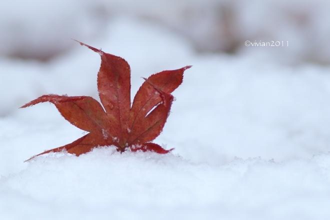 初雪を撮りに ~八幡山公園~_e0227942_22354293.jpg