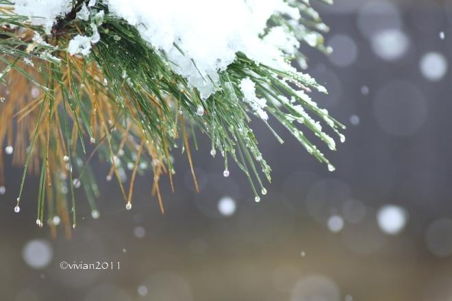 初雪を撮りに ~八幡山公園~_e0227942_22370025.jpg