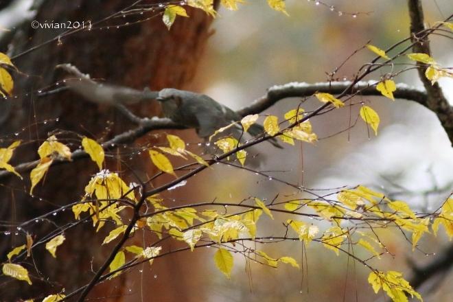 初雪を撮りに ~八幡山公園~_e0227942_22383436.jpg