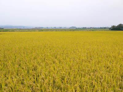 無農薬の『雑穀米』、『発芽玄米』 平成28年度の新米の『雑穀米』、『発芽玄米』大好評発売中!_a0254656_1772813.jpg