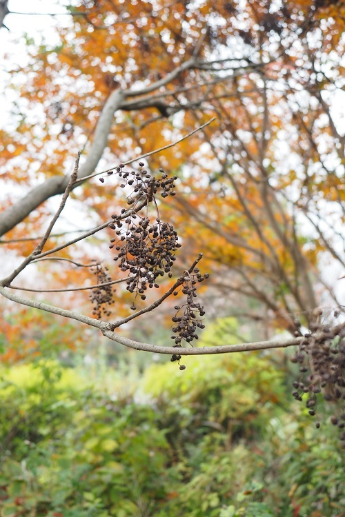 秋の森_a0292060_16005091.jpg