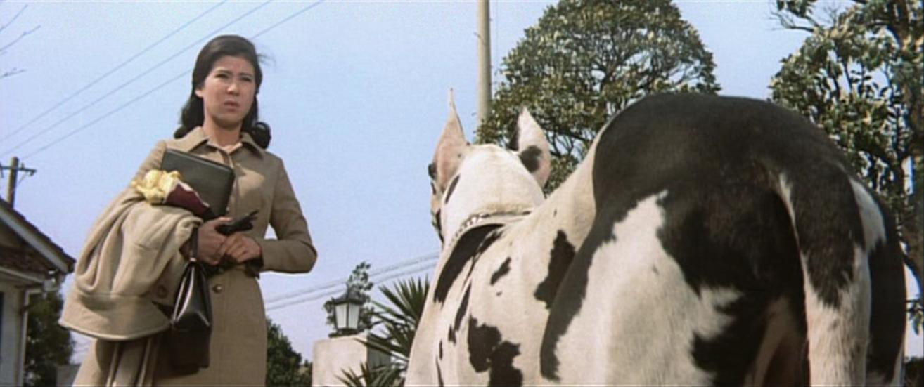 犬越しに演技をするハーフアップした映画の中の十朱幸代