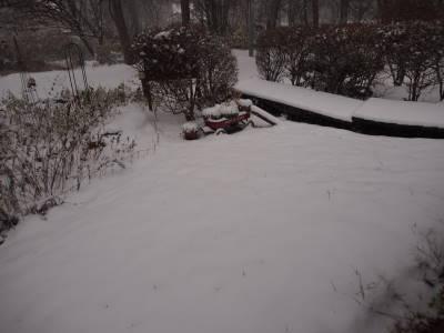 冬支度の途中で_a0129867_9523875.jpg