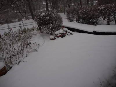 冬支度の途中で_a0129867_9525485.jpg