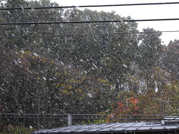 人生初体験の11月の初雪に震える:11・24_c0014967_18393948.jpg