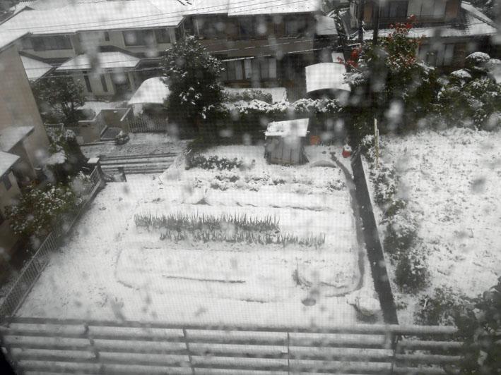 人生初体験の11月の初雪に震える:11・24_c0014967_18395679.jpg