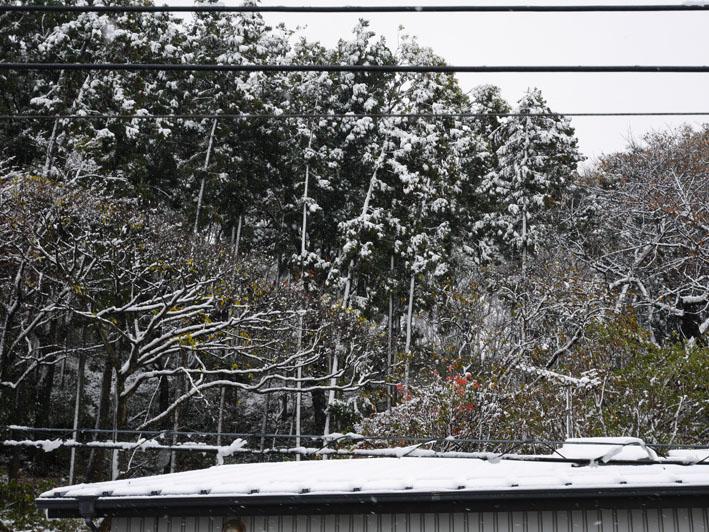 人生初体験の11月の初雪に震える:11・24_c0014967_18402113.jpg
