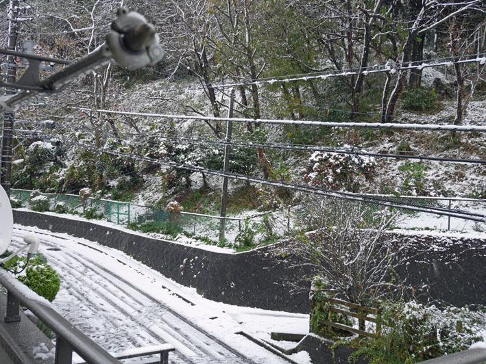 人生初体験の11月の初雪に震える:11・24_c0014967_18403280.jpg
