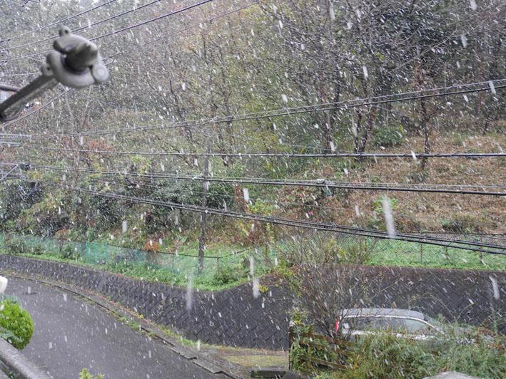 人生初体験の11月の初雪に震える:11・24_c0014967_184088.jpg