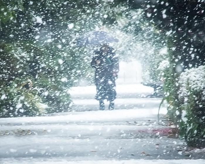 11月の初雪。_b0022268_12154497.jpg
