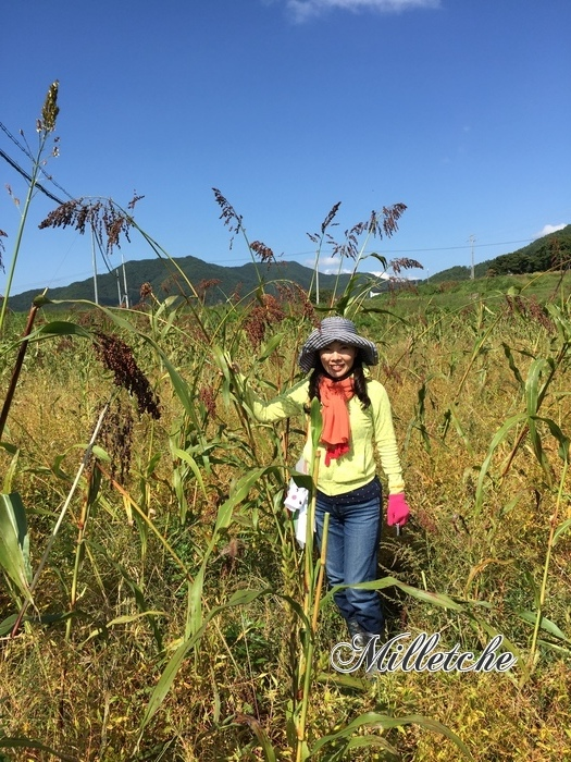雑穀シコクビエの収穫体験 @長野県伊那市_c0220172_14061498.jpeg