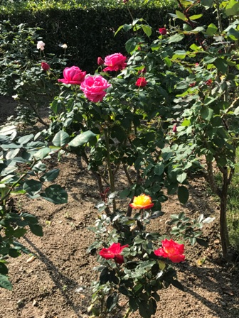 香椎花園_b0214473_831867.jpg