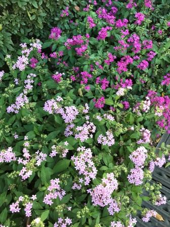 香椎花園_b0214473_832661.jpg