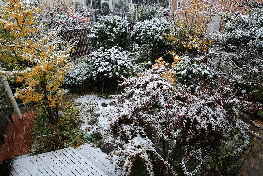 11月の雪_a0107574_19371293.jpg