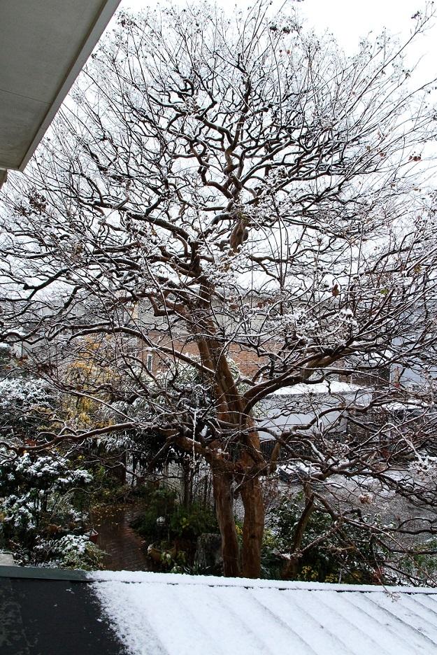 11月の雪_a0107574_19372440.jpg