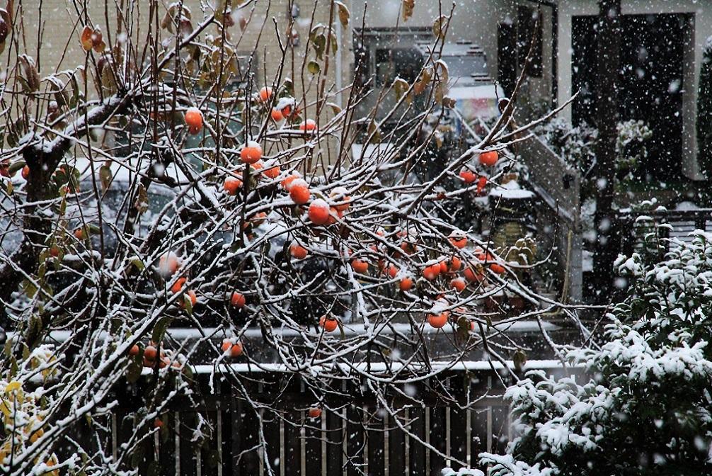 11月の雪_a0107574_19381101.jpg