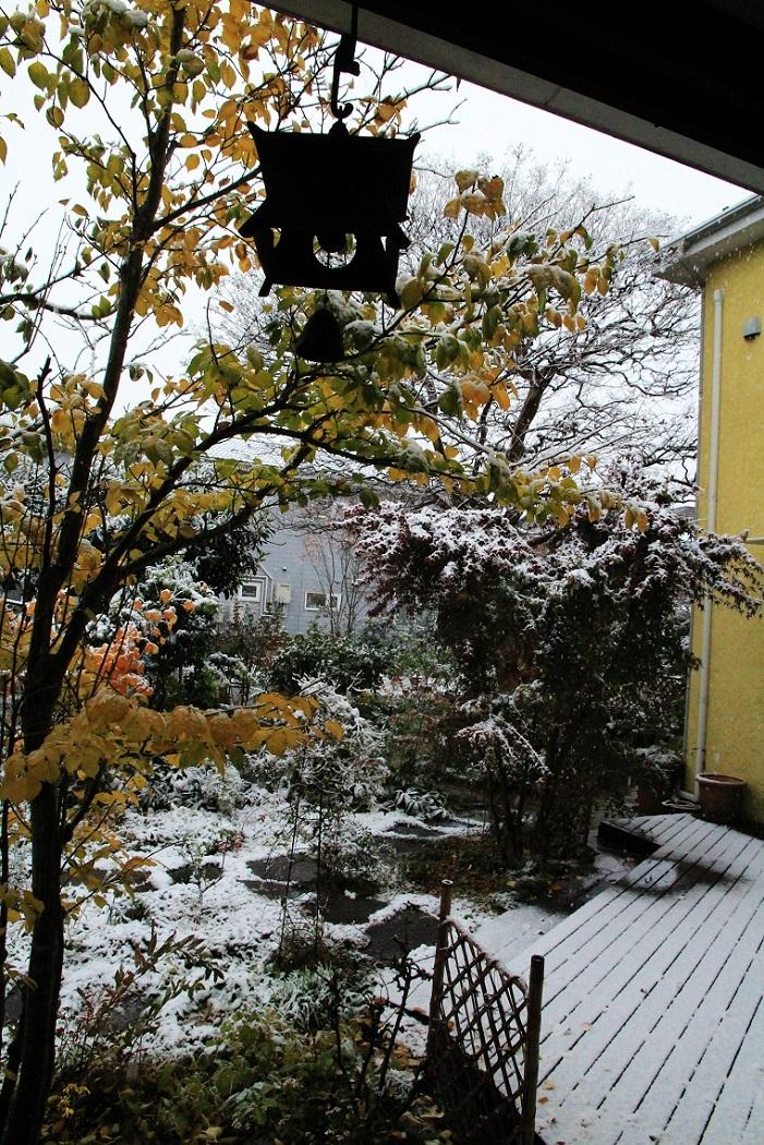 11月の雪_a0107574_19385933.jpg