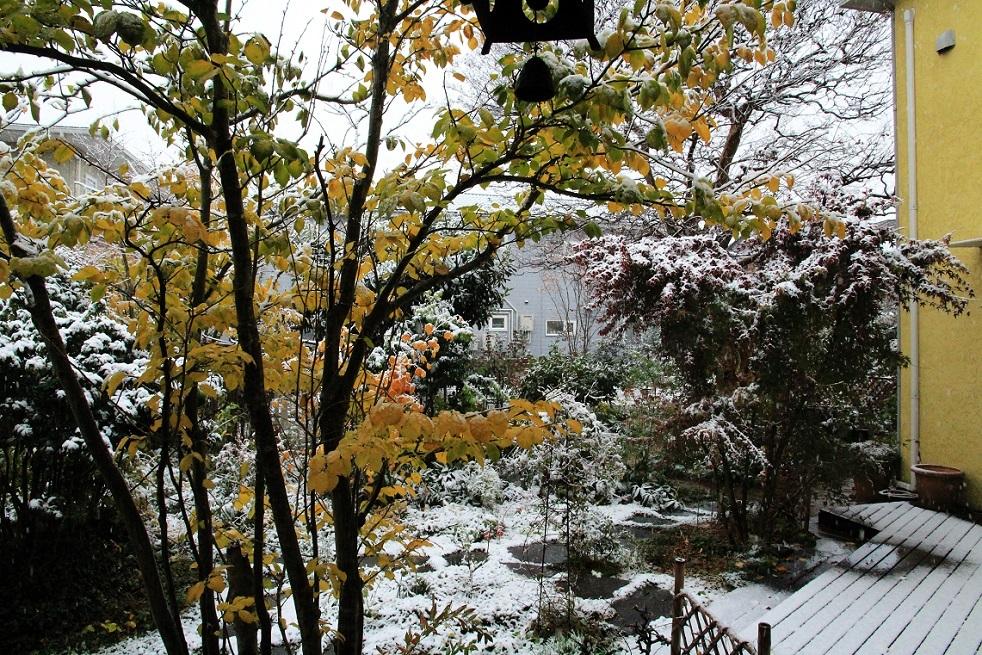 11月の雪_a0107574_19391674.jpg