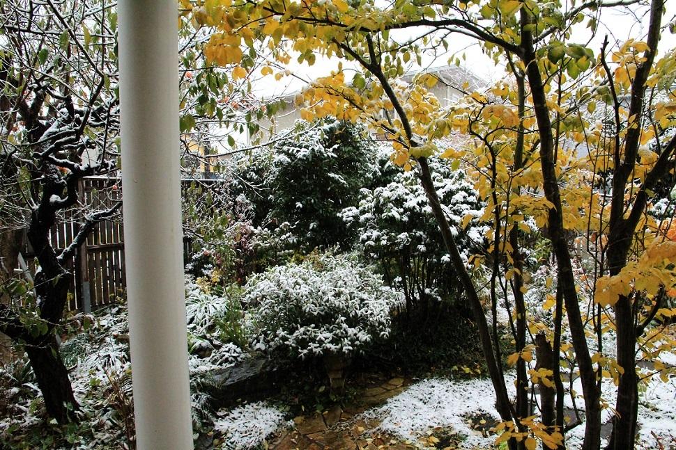 11月の雪_a0107574_19392589.jpg