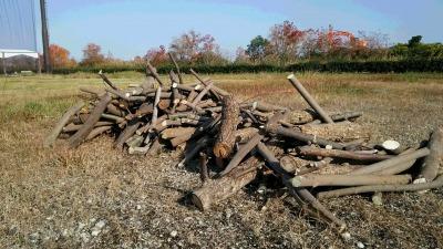 伐採木・剪定枝の無料配布について_d0338682_11141905.jpg