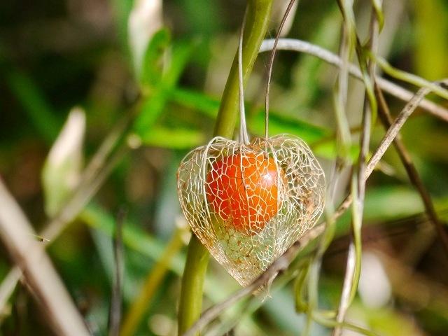 赤い実が透けて見える網頬突き_d0088184_20563108.jpg