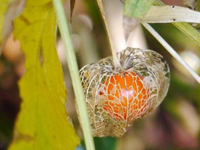 赤い実が透けて見える網頬突き_d0088184_20564269.jpg