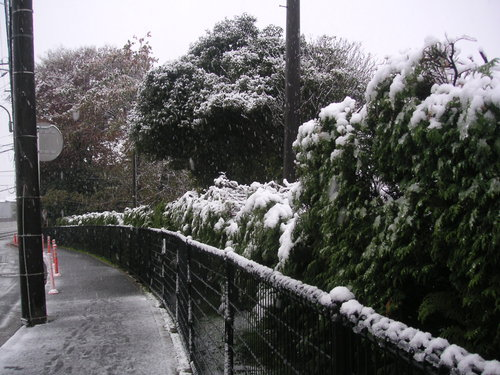 寒い11月の初雪_e0017093_19362820.jpg
