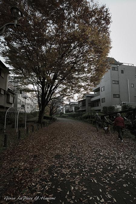 風景の写真 枯葉散る夕暮れは_b0133053_00570727.jpg