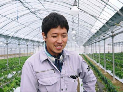 熊本イチゴ『さがほのか』 収穫スタート!本格的な収穫及び販売は12月中旬(予定)より!_a0254656_1740361.jpg