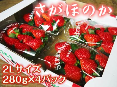 熊本イチゴ『さがほのか』 収穫スタート!本格的な収穫及び販売は12月中旬(予定)より!_a0254656_18514944.jpg