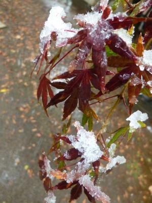 autumn leaves×snow   観測史上初!_a0165160_09093436.jpg