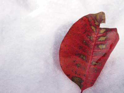 秋と冬_a0129867_10181850.jpg