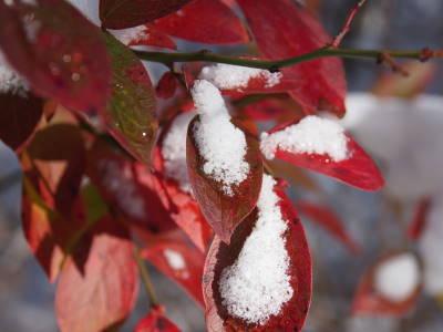 秋と冬_a0129867_10183066.jpg