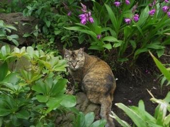 猫が短い声でニャッと鳴く時は_f0325471_19332860.jpg