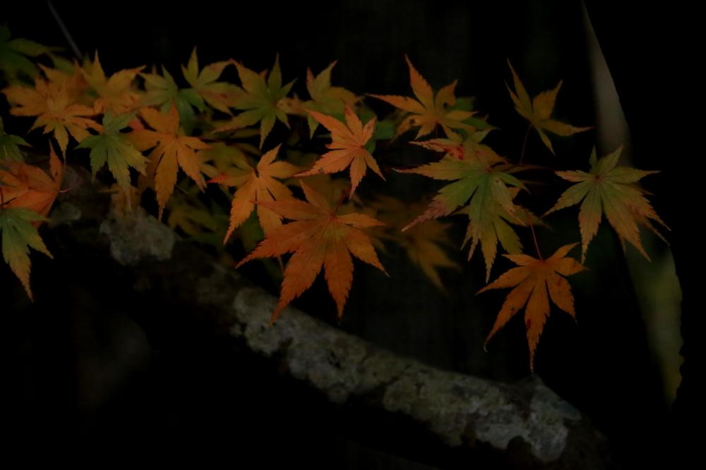 穴場の桐生川(➁)_e0305388_08443772.jpg