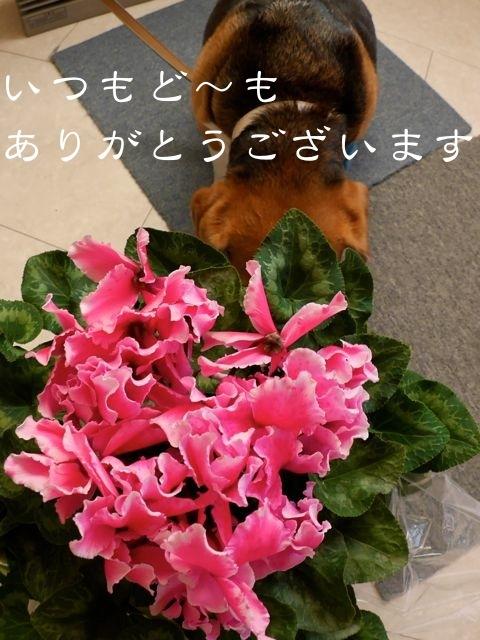 b0359692_10480626.jpg
