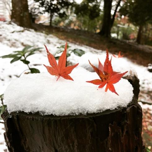 初雪と紅葉_d0122797_06093360.jpg