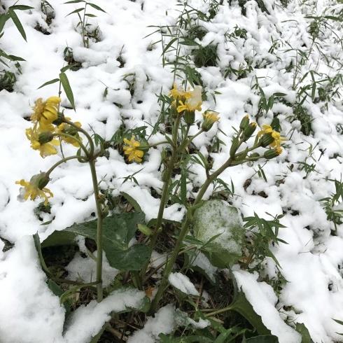 初雪と紅葉_d0122797_06112317.jpg