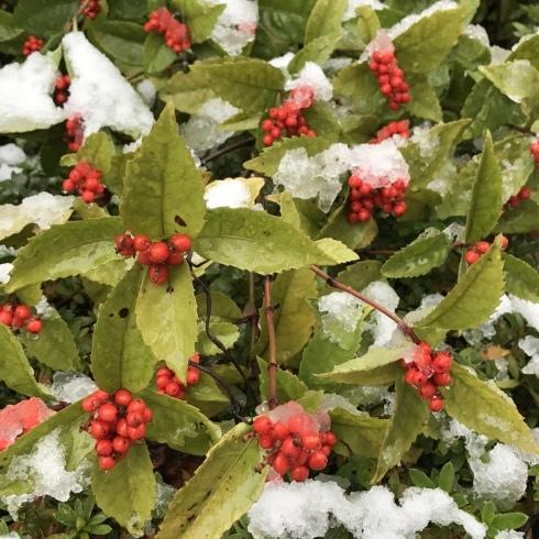 初雪と紅葉_d0122797_06115643.jpg