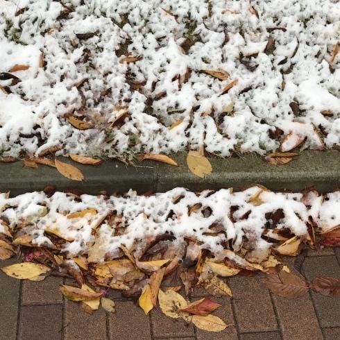 初雪と紅葉_d0122797_06122323.jpg