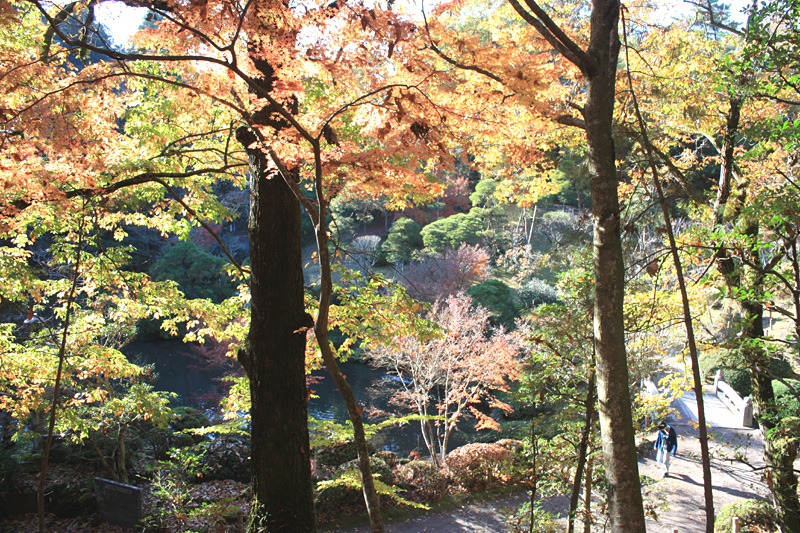 成田山の紅葉_b0114798_17505483.jpg
