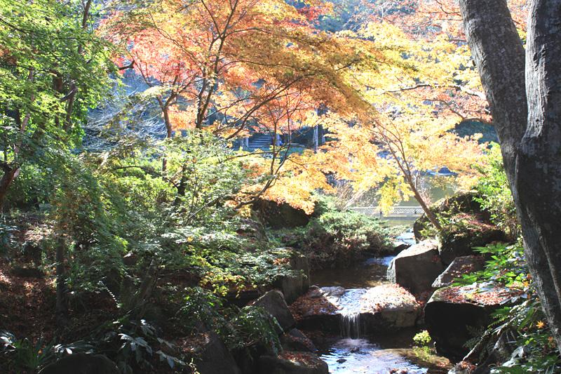 成田山の紅葉_b0114798_21234067.jpg