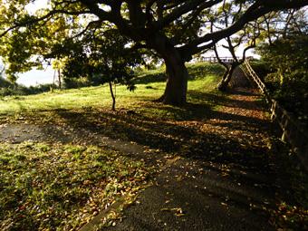 一本の樹_c0195909_6423243.jpg