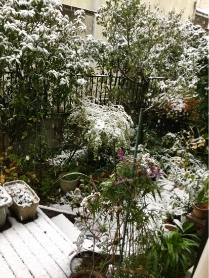11月の雪_f0329311_11435398.jpg