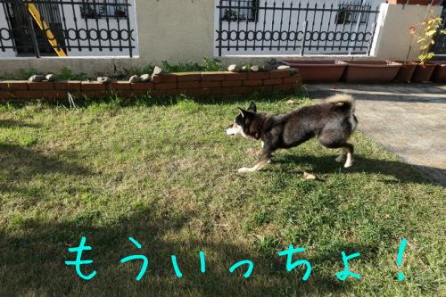 f0369014_15041537.jpg