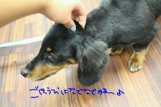 b0130018_09492185.jpg