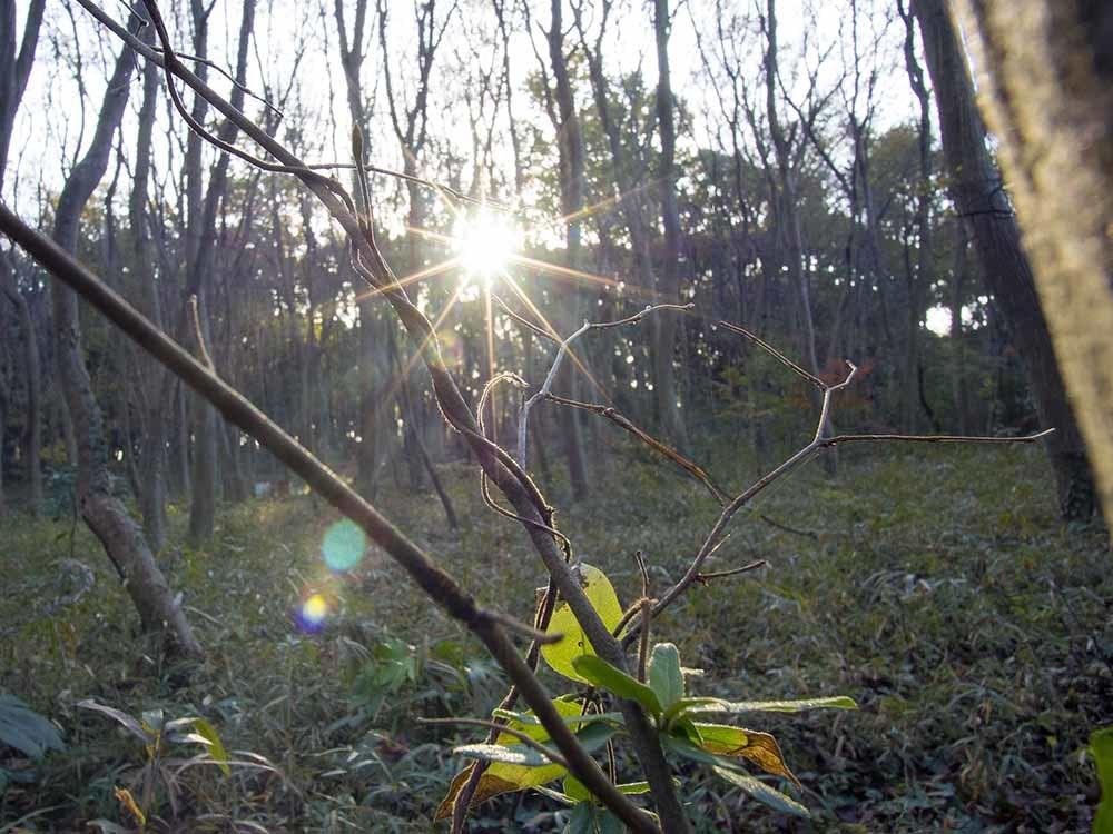 越冬トンボ ホソミオツネントンボとオツネントンボ_f0324026_19514207.jpg