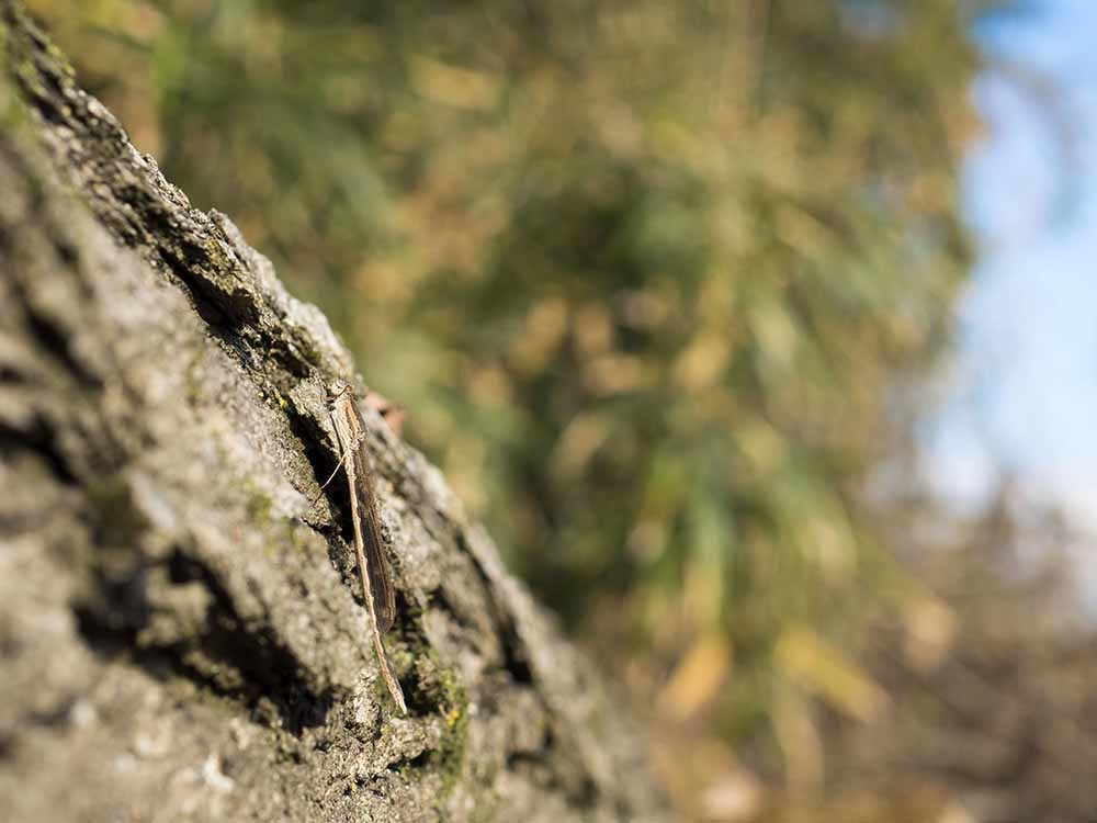 越冬トンボ ホソミオツネントンボとオツネントンボ_f0324026_20070541.jpg