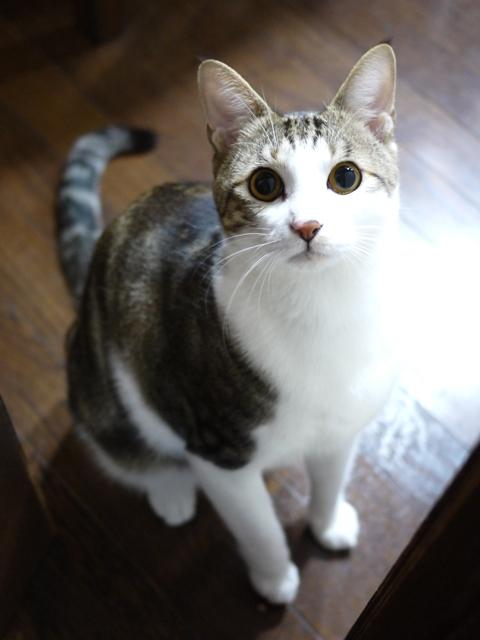 猫のお留守番 ラッキーくん編。_a0143140_21524646.jpg